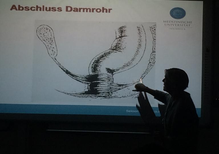 Anatomie OP-Techniken Innsbruck_2015_4